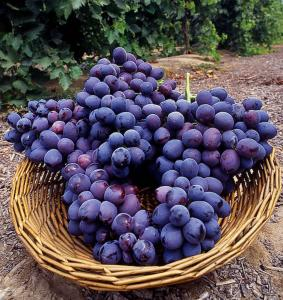 purple_grapes.thumbnail